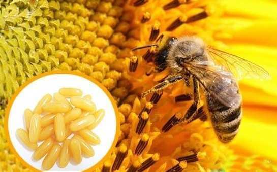 Shopee.vn vi pham quy dinh quang cao sua ong chua va sun ca map hinh anh 1