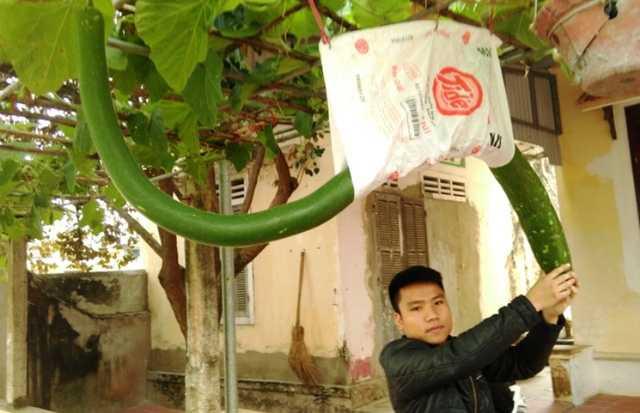 Dan Thanh Hoa do xo di xem qua bau dai hon 2m, uon luon nhu hinh con ran hinh anh 4