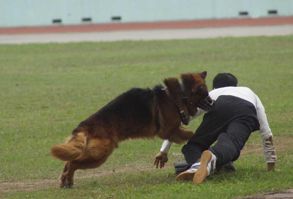 Xem bo doi bien phong trinh dien cong phu tuyet dinh, dieu khien cho chien dau hinh anh 11