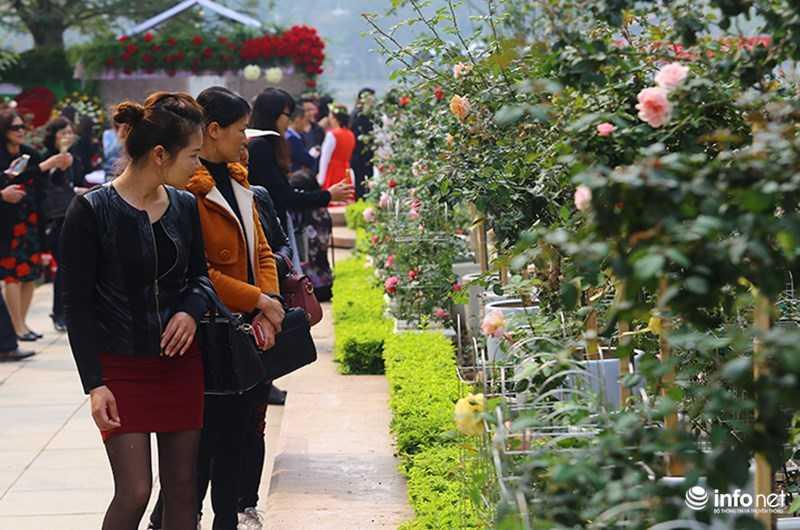 Le hoi hoa hong Bulgaria: Quang cao khac xa thuc te hinh anh 2