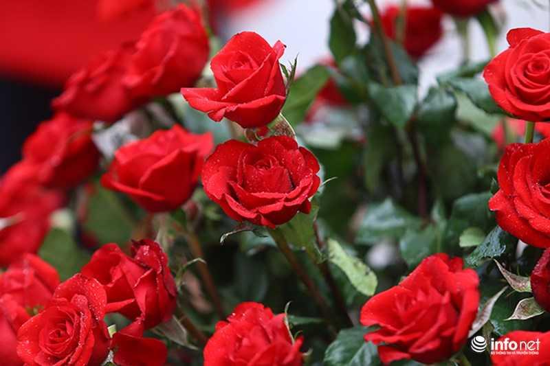 Le hoi hoa hong Bulgaria: Quang cao khac xa thuc te hinh anh 9