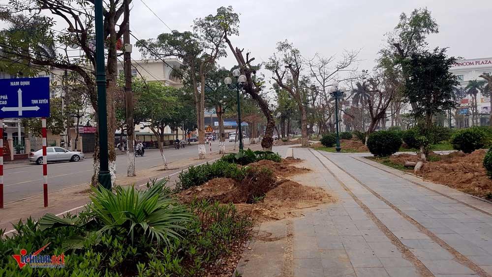 Hang tram cay co thu bi di doi khoi manh dat 'vang' o Thai Binh hinh anh 8