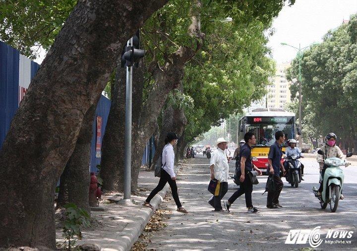 Chat ha, di chuyen hon 1.300 cay xanh: Ha Noi thong tin chinh thuc hinh anh 1