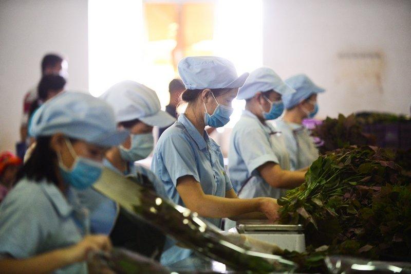 Dien vien Huy Khanh, Hong Phuc tranh tai trong vuon rau sach hinh anh 10