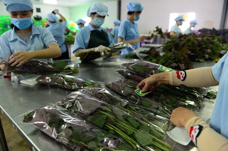 Dien vien Huy Khanh, Hong Phuc tranh tai trong vuon rau sach hinh anh 11