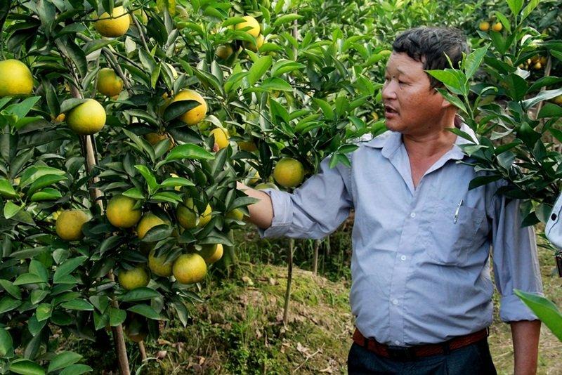 Cam Hung Yen chuan VietGAP 'chinh phuc' nguoi tieu dung thu do hinh anh 2