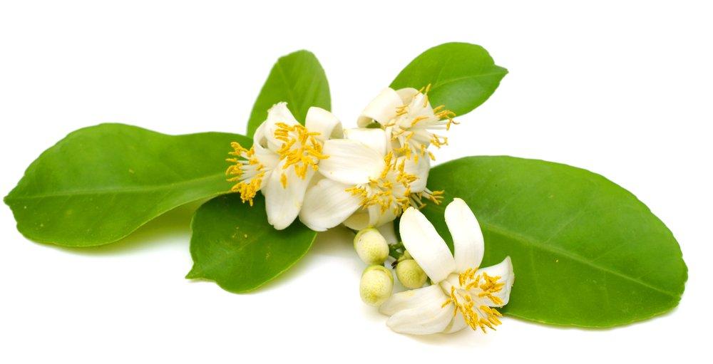 DNTN Long Thuan lanh buoc tien phong voi tinh dau hoa buoi dac biet hinh anh 1