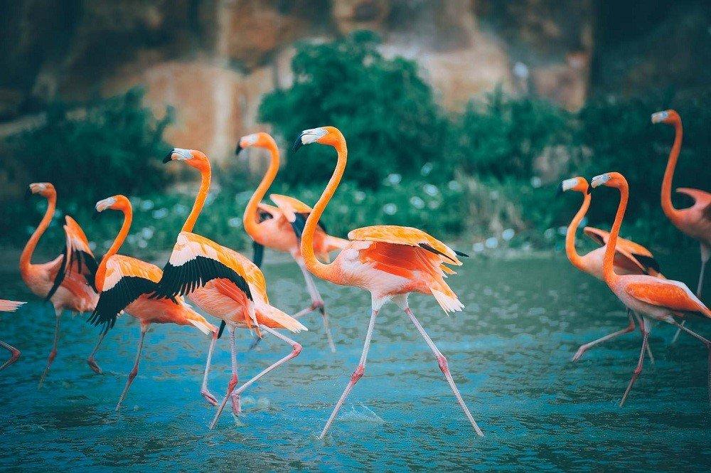 Lac loi giua ngan hoa Tuy-lip tai Vinpearl Land Nha Trang hinh anh 12