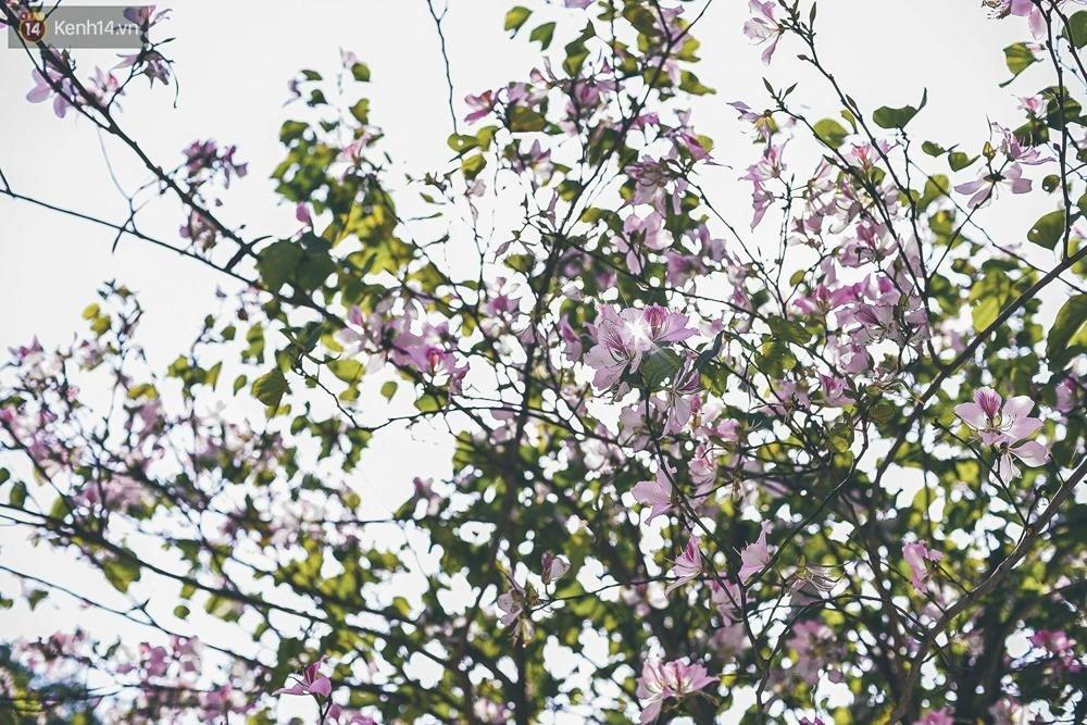 Thang 3 cham ngo Ha Noi, dep vo cung voi nhung mua hoa lung linh hinh anh 3