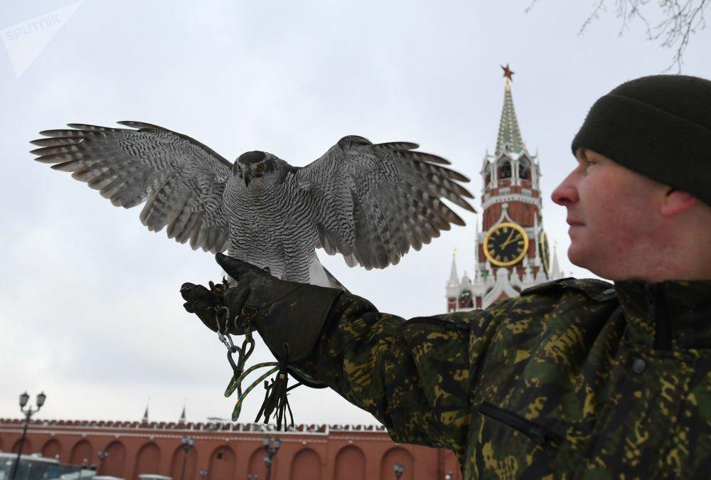 Anh: Biet doi chim san moi bao ve Dien Kremlin hinh anh 1