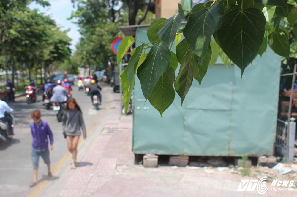 TP.HCM dep 'cuop' via he: Chot dan phong van chinh inh, thach thuc hinh anh 1