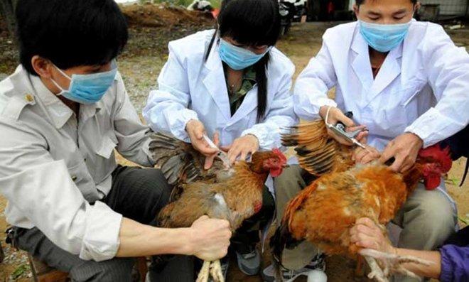 Bung phat dich cum virus H7N9, toc do nhanh gap 1.000 lan hinh anh 1