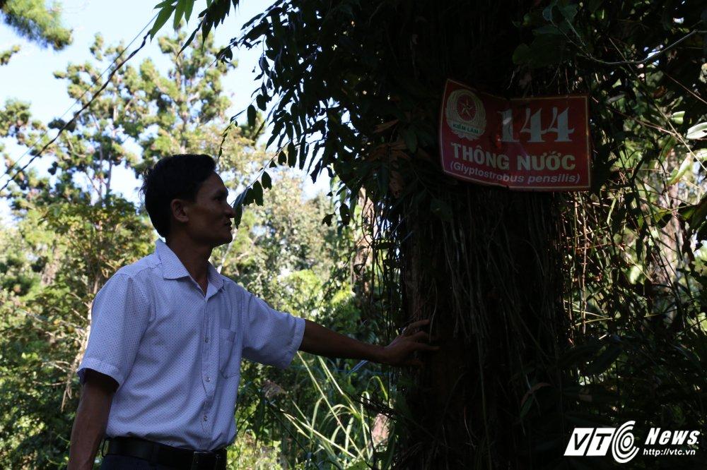 Can canh rung cay thuy tung o Viet Nam co 'nui tien' cung khong mua noi hinh anh 9