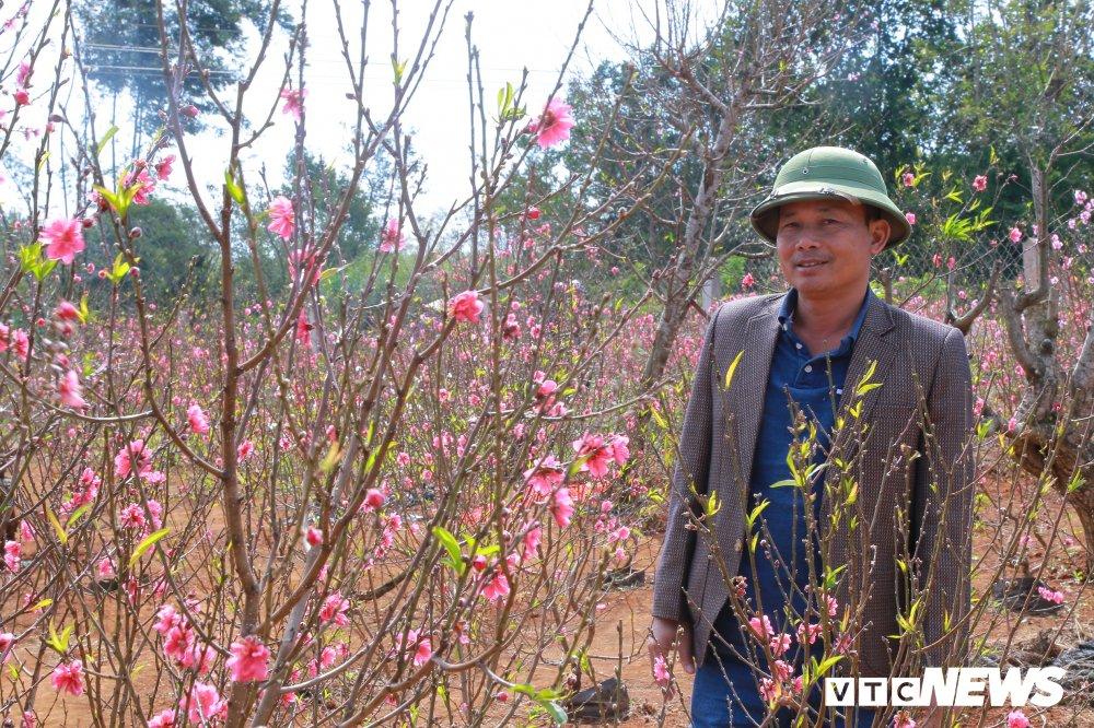 Hoa dao Nhat Tan khoe sac tren dat Tay Nguyen cho Tet hinh anh 5