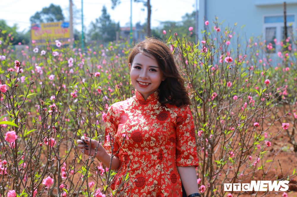 Hoa dao Nhat Tan khoe sac tren dat Tay Nguyen cho Tet hinh anh 10