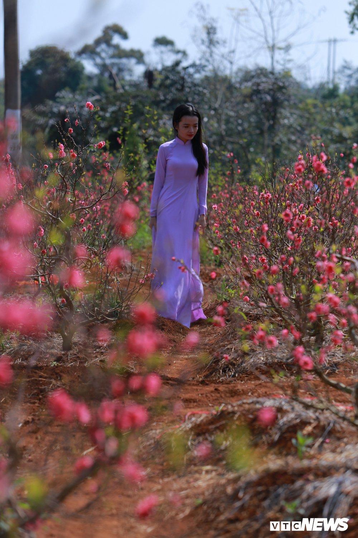 Anh: Thieu nu Tay Nguyen khoe sac ben vuon dao Nhat Tan hinh anh 4