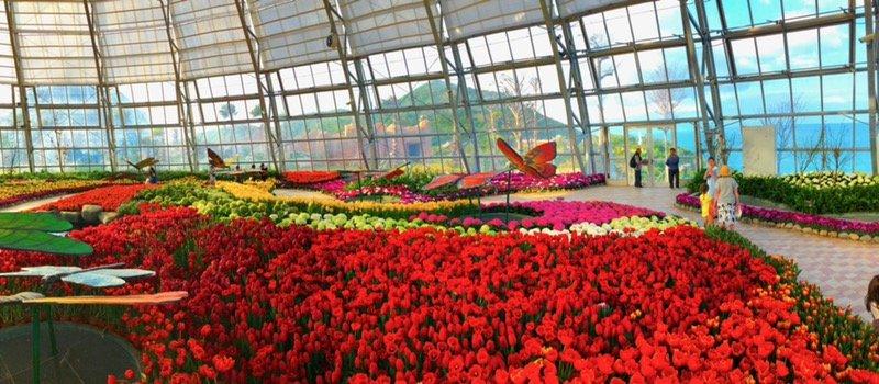 Ra mat le hoi Tulip lon nhat Viet Nam Vinpearl Nha Trang hinh anh 3
