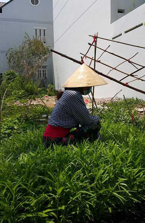 Me Ho Ngoc Ha vac dat chai tay de trong rau tren san thuong hinh anh 6