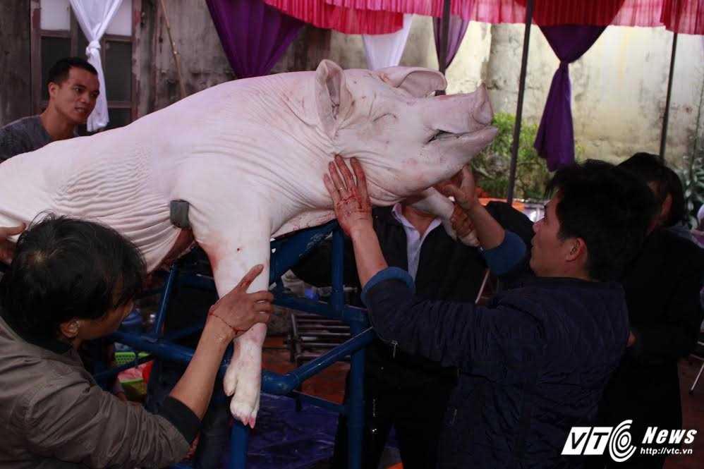Anh: 'Ong lon' mac 'ao choang' mo mang duoc ruoc khap lang La Phu hinh anh 2