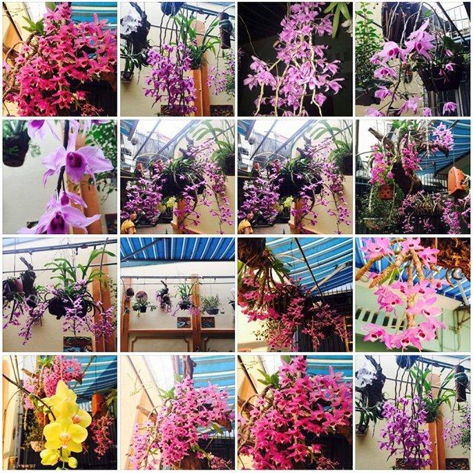 May bay quan su roi tai Nghe An: Chang phi cong rat yeu hoa phong lan hinh anh 1
