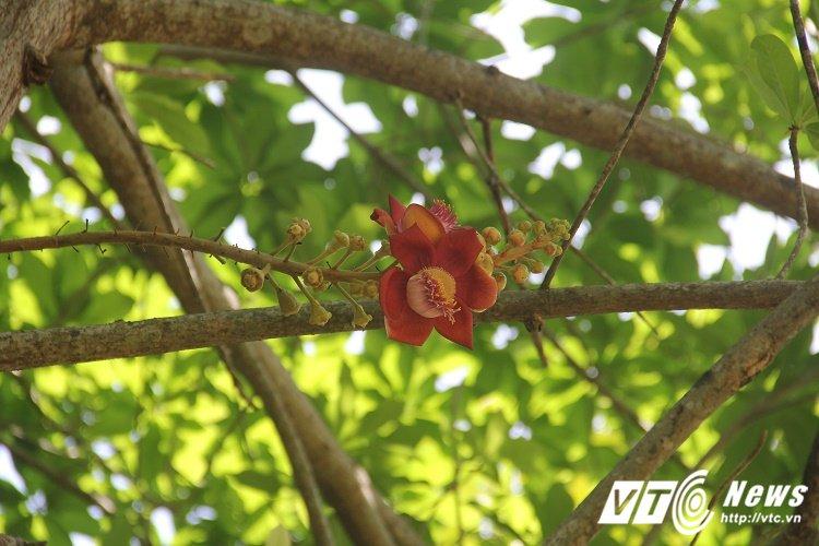 Anh: Hoa vo uu do ruc truoc cua chua Thien Mu khien du khach dam say hinh anh 8