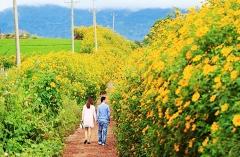 Du khách đổ về Gia Lai, tham gia lễ hội hoa dã quỳ