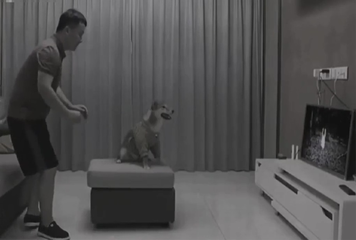 "Chó ""sợ ma"" run cầm cập"