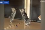 Lần đầu thấy gương, mèo hành động khiến chủ không nhịn được cười