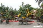 Ảnh: Ngắm những cây cảnh độc lạ giá cả trăm triệu đồng của kiến trúc sư ở Hưng Yên
