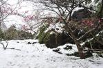 Dự báo thời tiết 10 ngày tới: Miền Bắc rét nhất từ đầu đông, vùng núi cao xuất hiện mưa tuyết