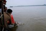Phóng sinh cá chim trắng xuống sông Hồng: Việc làm thiếu hiểu biết, tiếp tay cho kẻ xấu trục lợi