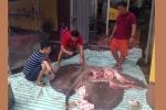 Vận chuyển cá đuối gai nặng hơn 200 kg từ Thái Lan về Hà Nội