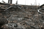 Chỉ đạo khởi tố hình sự vụ án chặt phá rừng ở Bắc Giang