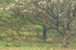 Người đàn ông chết trong tư thế treo cổ trên cây ở Đồng Nai