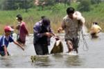 Video: Dân Đồng Nai đổ xô bắt cá 'khủng' ở chân đập thủy điện Trị An