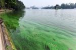 Video: Mặt nước Hồ Gươm nổi váng xanh đậm đặc, bốc mùi tanh khó chịu