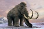 Voi ma mút có thể 'tái sinh' và giải cứu Bắc Cực