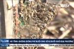 Hà Tĩnh: Không đóng phí nuôi ong sẽ bị đuổi khỏi địa phương