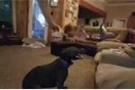 Chú chó làm trò khiến 2 em bé cười nắc nẻ