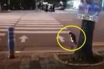Kinh ngạc mèo cũng biết tuân thủ luật giao thông như người
