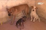 Cận cảnh điểm tập kết chó thả rông ở TP.HCM