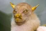 Phát hiện loài mới ở Việt Nam: Sinh vật nhỏ mặt quỷ