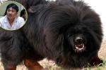 Hà Nội: Bé gái 8 tháng tuổi bị chó ngao Tây Tạng cắn chết thảm thương