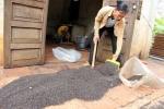 Kinh hoàng cảnh bọ đậu đen phủ kín nhà, tấn công dân Đồng Nai