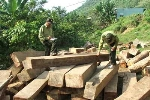 Phó bí thư huyện bị kiểm tra vì 'tàng trữ' gỗ quý