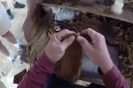 Cận cảnh quy trình làm ra điếu xì gà ở Cuba