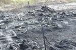 Đốt rác, người dân thiêu rụi một kho lốp ô tô