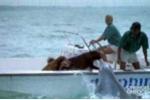 Cá heo phấn khích nhảy lên hôn chó