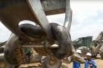 Video: Cận cảnh trăn khổng lồ đường kính bụng 1m, nặng gần nửa tấn ở Brazil