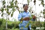 Ảnh: Hoang tàn vườn chanh leo tiền tỷ bị kẻ xấu chặt phá trong đêm ở Nghệ An